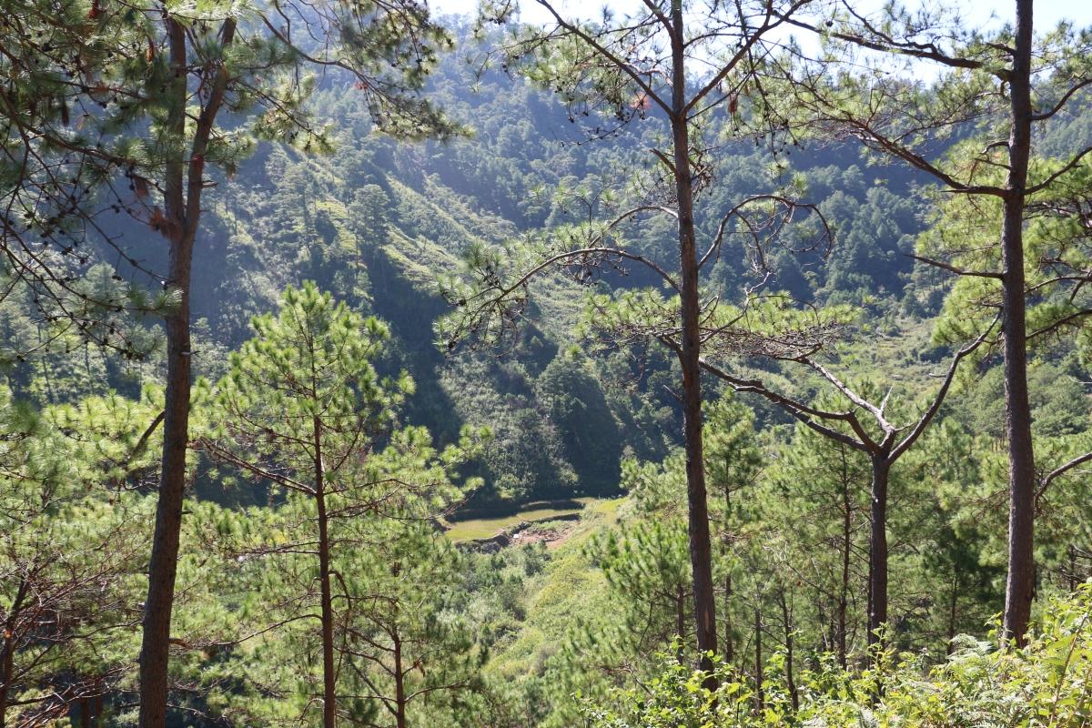 Barefoot Chronicles: Panabungen, Besao